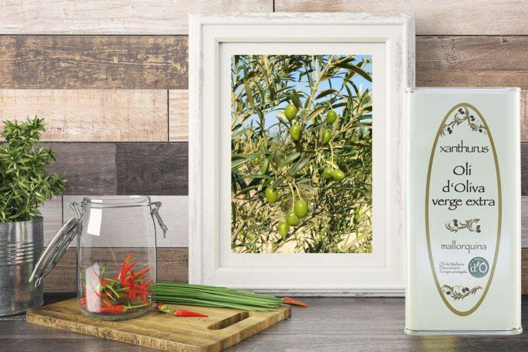 Olive Oil verge extra